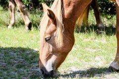 head häst Arkivbilder