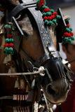 head häst för detalj Arkivbilder
