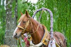 head häst för fjärd Royaltyfria Bilder
