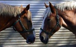 head hästar som talar till två arkivfoton
