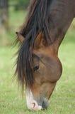 head häststående Royaltyfria Bilder