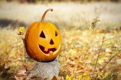 Head halloween pumpa på stubbe i skog Royaltyfria Foton