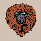 Head handsome tamarin Stock Image
