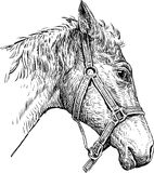 Head of harnessed horse Stock Photo