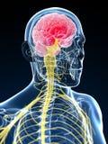 Head - headache Stock Image
