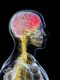 Head - headache vector illustration
