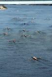 Head of the Hooch Rowing Regatta Royalty Free Stock Image