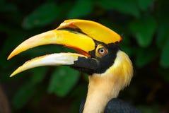 head of hornbill Stock Photo