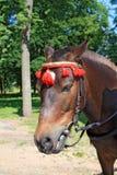 Head horse Stock Photo