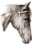 Head-horse. Drawing illustration of a horse