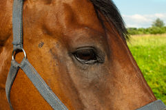 Head of a horse Stock Photo