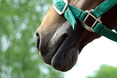 Head of horse. On day time stock images
