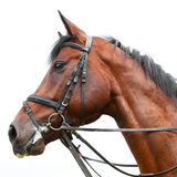 Head of a horse Stock Images