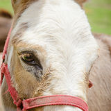 Head of a horse of brown color Royalty Free Stock Images