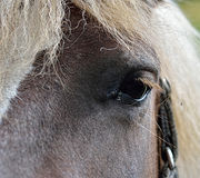Head of horse, detail Royalty Free Stock Images