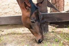 Head of a horse eating a green grass near a fence close up. Head of a horse eating a green grass near a fence close up Royalty Free Stock Images