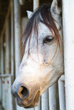 Head of horse Royalty Free Stock Photography