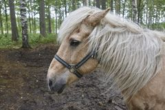 Head horse in a Finland forest landscape. Animal background. Stock Photos