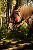 Folklore horse Royalty Free Stock Images