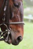 Head of horse Stock Photo
