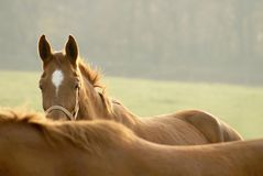 Head of horse in the light of the rising sun Royalty Free Stock Photo
