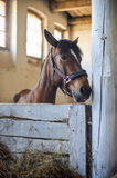 Head of horse looking over the stable doors. On the background of other horses Royalty Free Stock Images