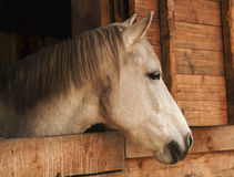 The head of a horse looks out onto the street from a wooden stall Stock Photo
