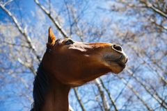 Head of a horse Royalty Free Stock Photos