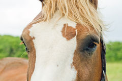 The head of a horse. Royalty Free Stock Photos