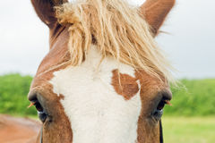 The head of a horse. Stock Images