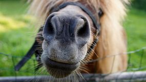 Head of a horse. In a rural yard Royalty Free Stock Photo