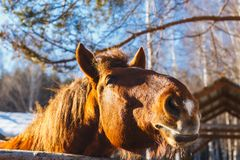 Head of horse on a sunny day stock images