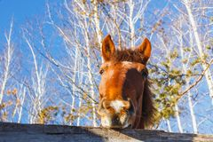 Head of horse on a sunny day stock photo
