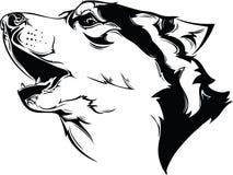 Head howling dog Stock Photo