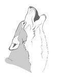 Head howling wolf Stock Photography
