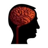head human för hjärna Arkivfoton