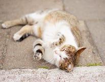 head hus för katt Arkivfoton