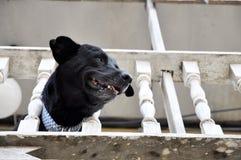 Head huset för kragen för kedjan för hundstången Fotografering för Bildbyråer