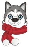 Head of husky with scarf Stock Photos