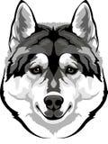 Head husky Royalty Free Stock Photos