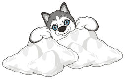 Head of husky and white objects Stock Image