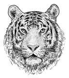 Head illustration för tiger, teckning, gravyr, färgpulver, linje konst, vektor stock illustrationer