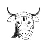 Head indian sacred cow Stock Image