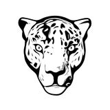 Head of Jaguar. Jaguar head illustration isolated on white background Stock Images