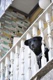 Head kedjan för huset för kragen för hundstången Arkivbild