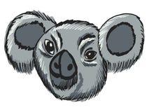 Head of koala Royalty Free Stock Images