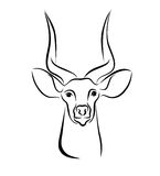Head Of Kudu Antelope Ink Line Art Stock Images