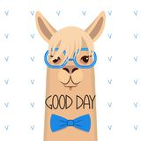 Head of a lama with a bang in blue glasses and a bow .Vector ill Stock Images