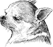 Head of a lap dog. Vecto image of a portrait of a little dog stock illustration