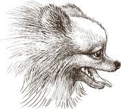 Head of lap dog. Vector drawing of the head of the little dog stock illustration